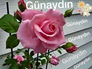 gunaydin-mesaji-grsl